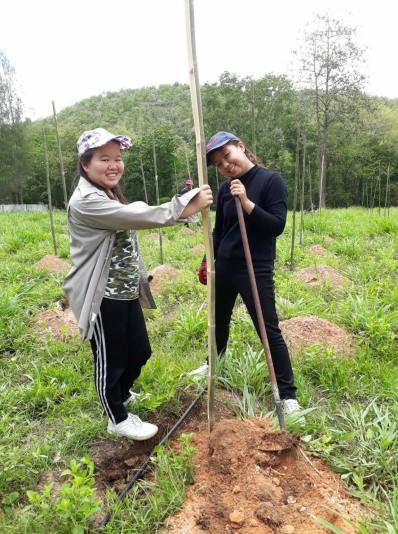 raintree tree planting2