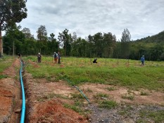 raintree tree planting4